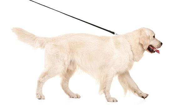 Advies over beweging voor je hond