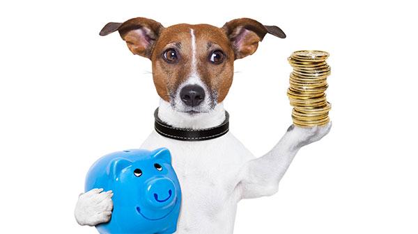 Investeer in je hond - laat je adviseren