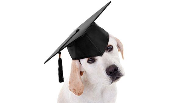 Advies over de beste training voor je hond