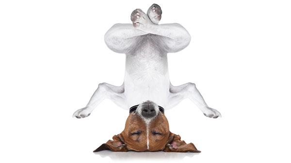 Advies over het algemene welzijn van je hond